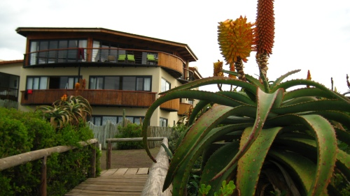 'African Perfection' (Apt name for a Guesthouse overlooking J-Bay, no?).