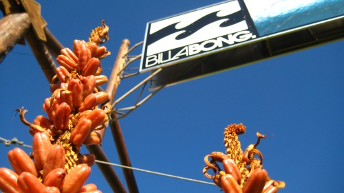 The iconic Billabong sign in downtown J-Bay, bordered by the iconic aloe plants.
