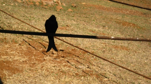 A bird hiding in shadow. Pilansberg Game Reserve, August 2009.